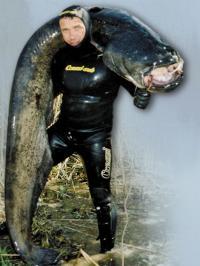 В них особенности подводной охоты в